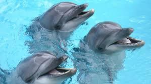 Tres delfines